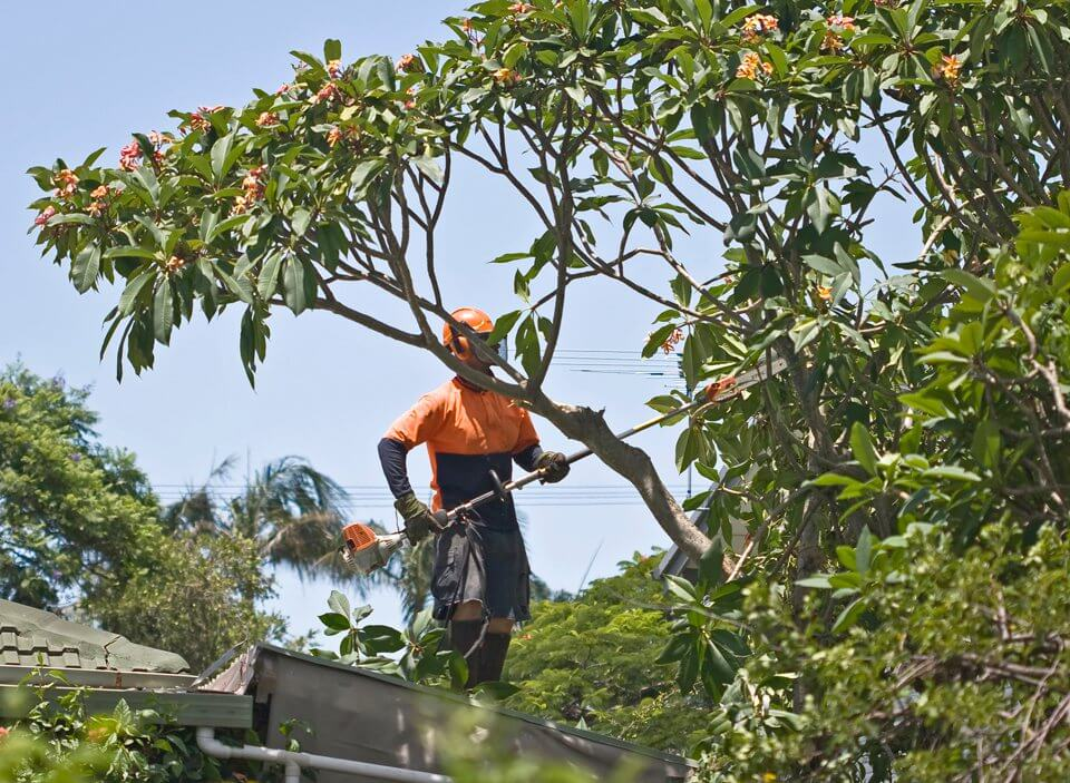 tree trimming service Longueville