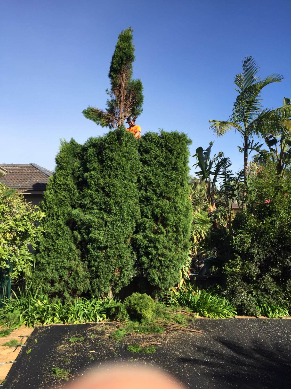 local tree trimming services Edgecliff