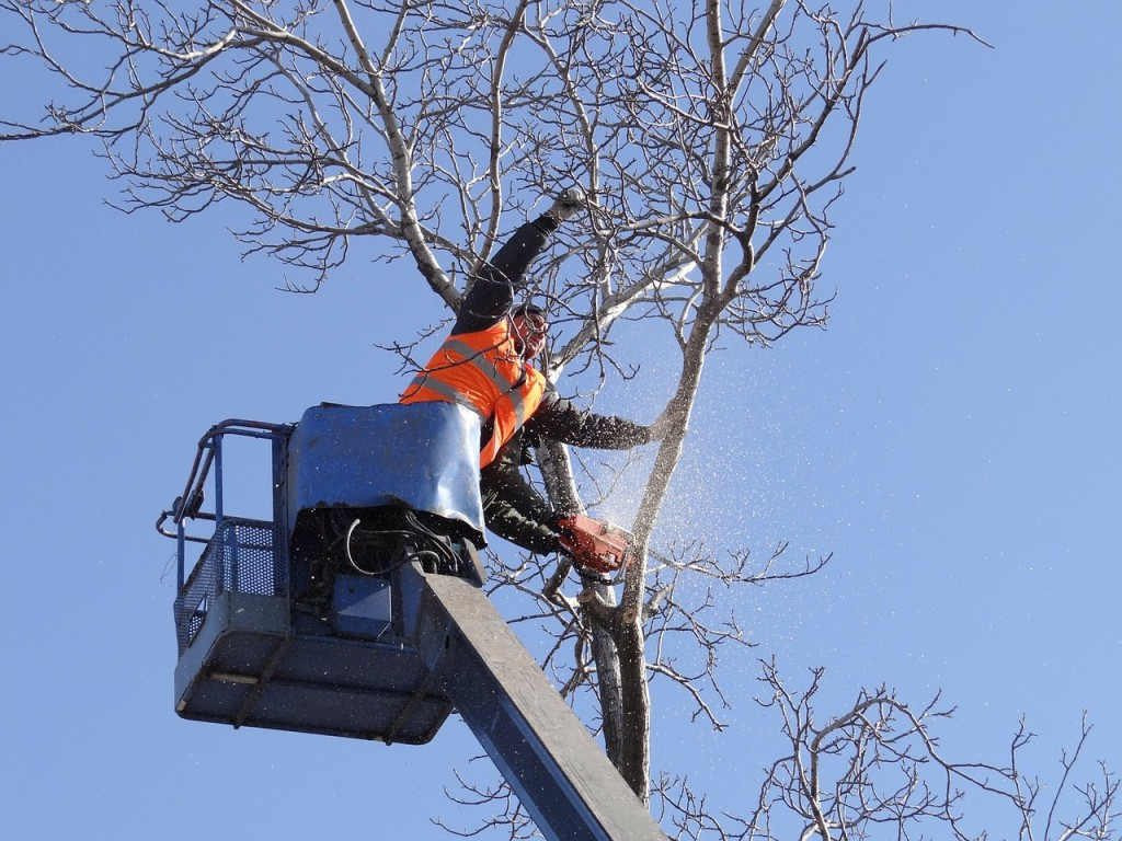 Local Tree Cutting Services Roseville