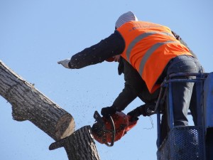 Tree Felling Services in Galston